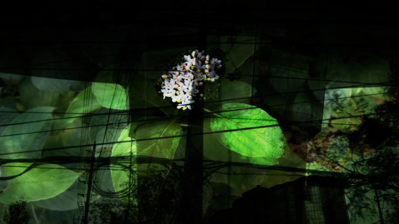 memento-mori-greenlampflowerxlarge-1471019790